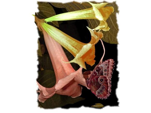 15.03.Fleur cornet